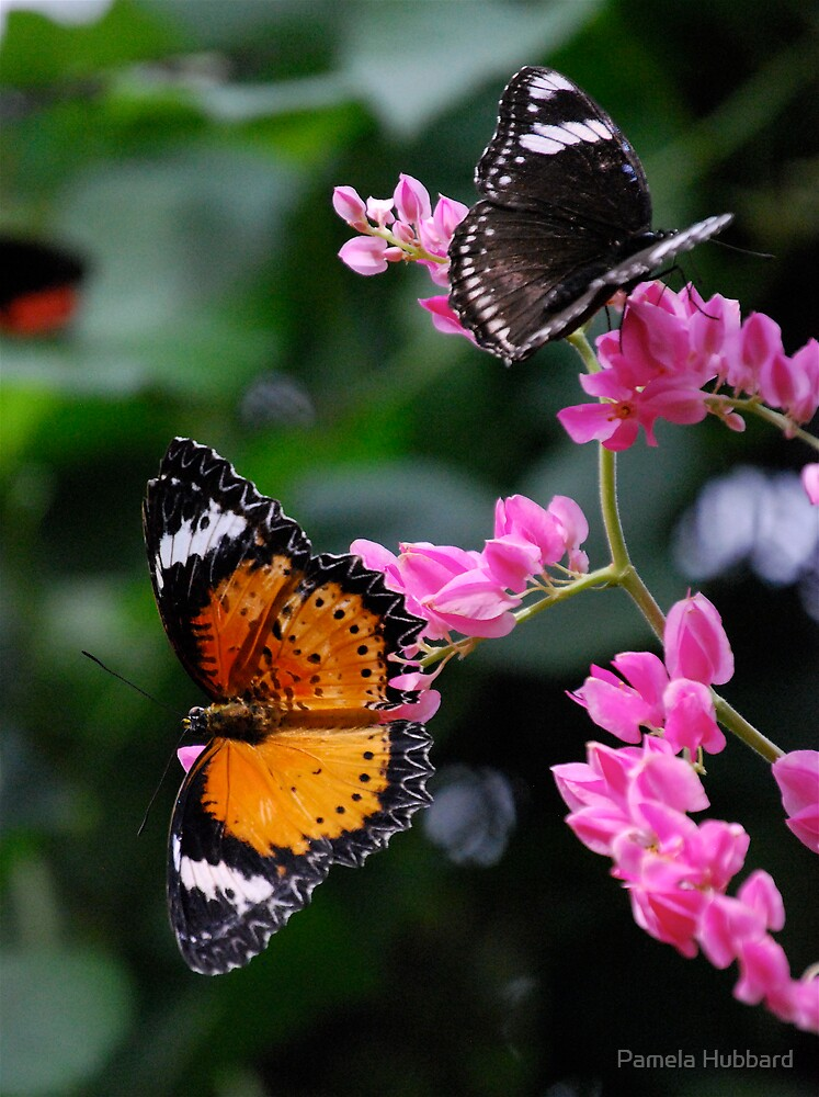 Butterflies Paradise by Pamela Hubbard