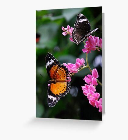 Butterflies Paradise Greeting Card