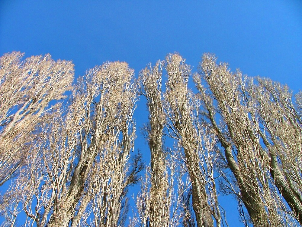 Winter Trees by FeBe