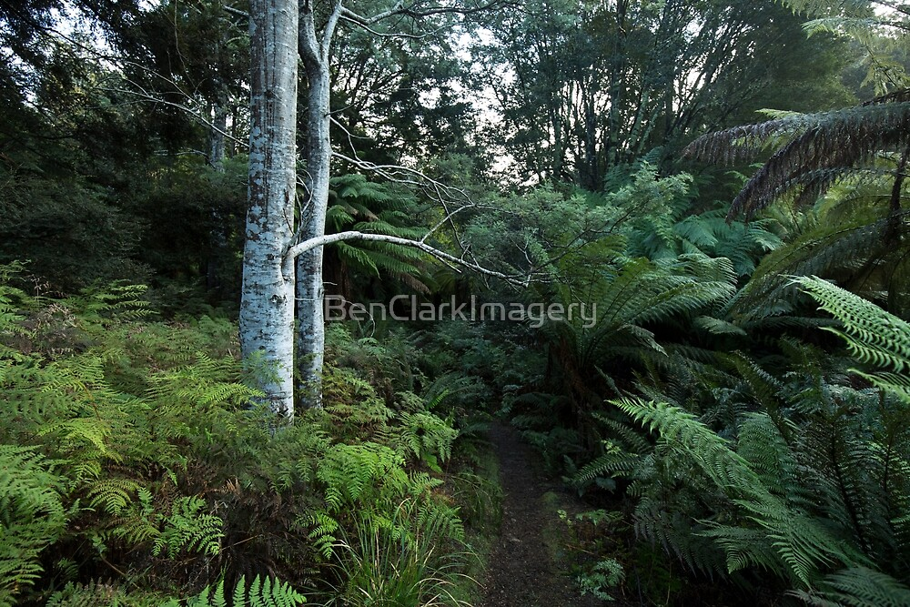 LIFFEY FOREST WALK by BenClarkImagery