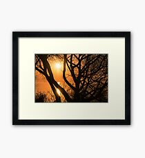 Gorgeous Morning Through the Tree Screen Framed Print