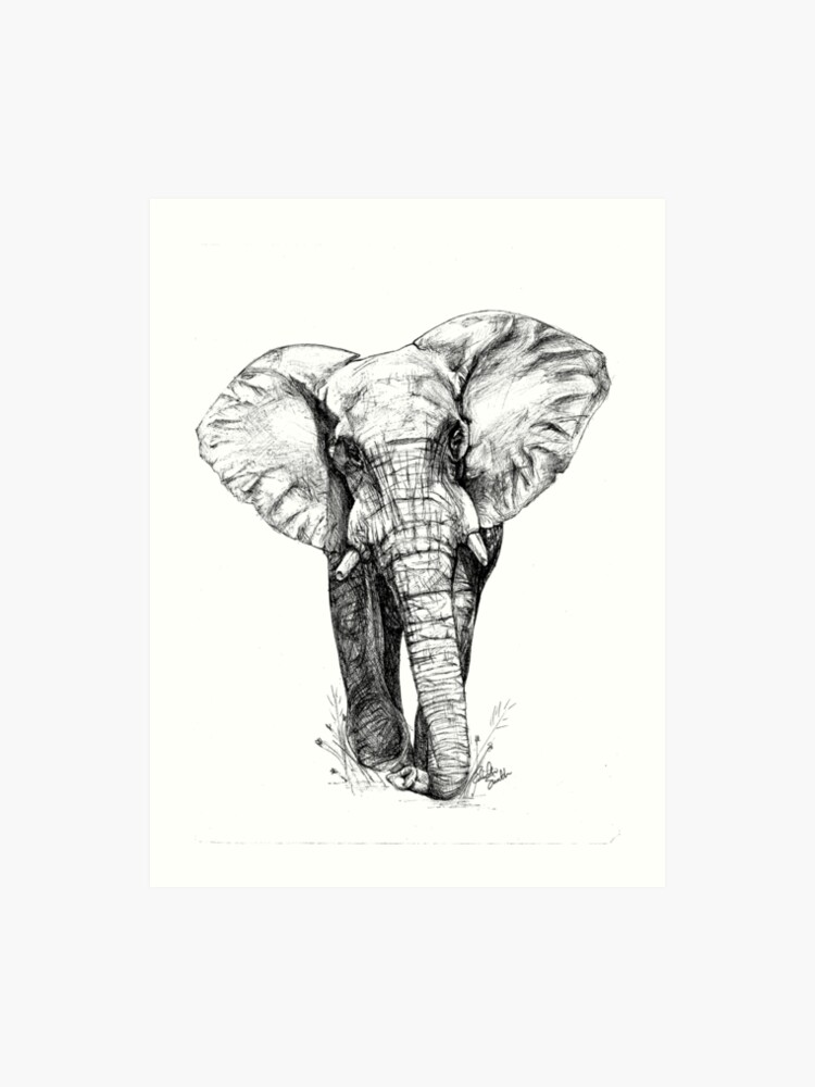 3d6566b8cb Majestic Elephant - Big 5 Series