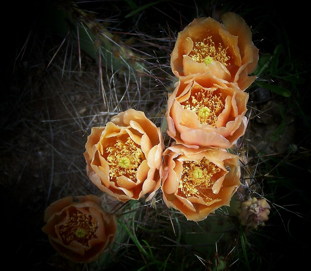 Prickly Pear Beauties by hellion