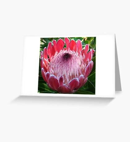 Ring of Fire Greeting Card
