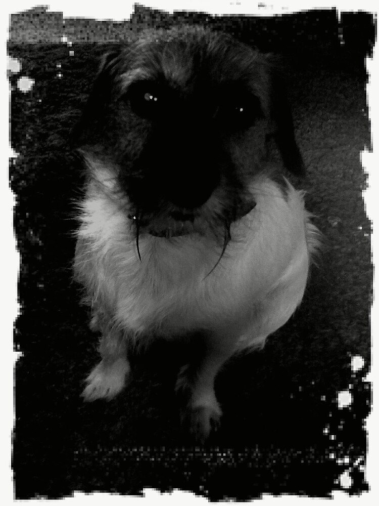 Sad lil puppy by Howie1