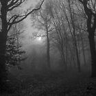 Foggy West Wood (I) by DonMc
