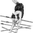 Border collie agility by doggyshop