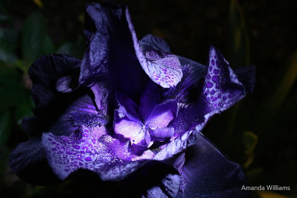 Black Iris by Amanda Williams