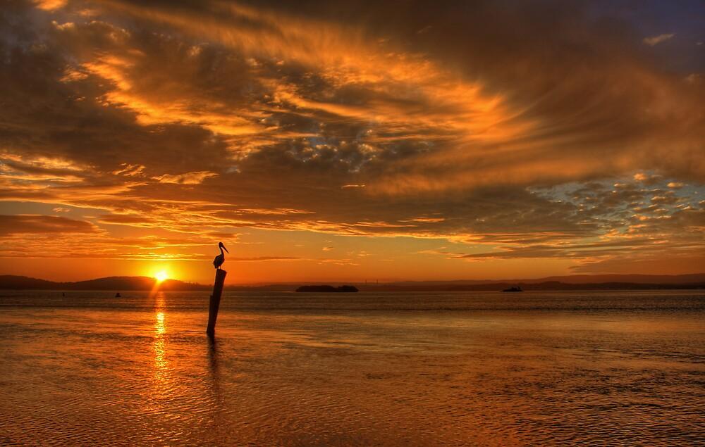 Golden Wave by Steve D