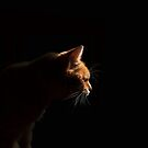 Profile of ginger cat with black background by turniptowers