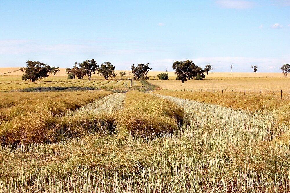 the start of the harvest [nikon d40 camera] by geoffgrattan