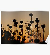 Beautiful yellow and brown Sunset over plants in Crete, Greece Poster