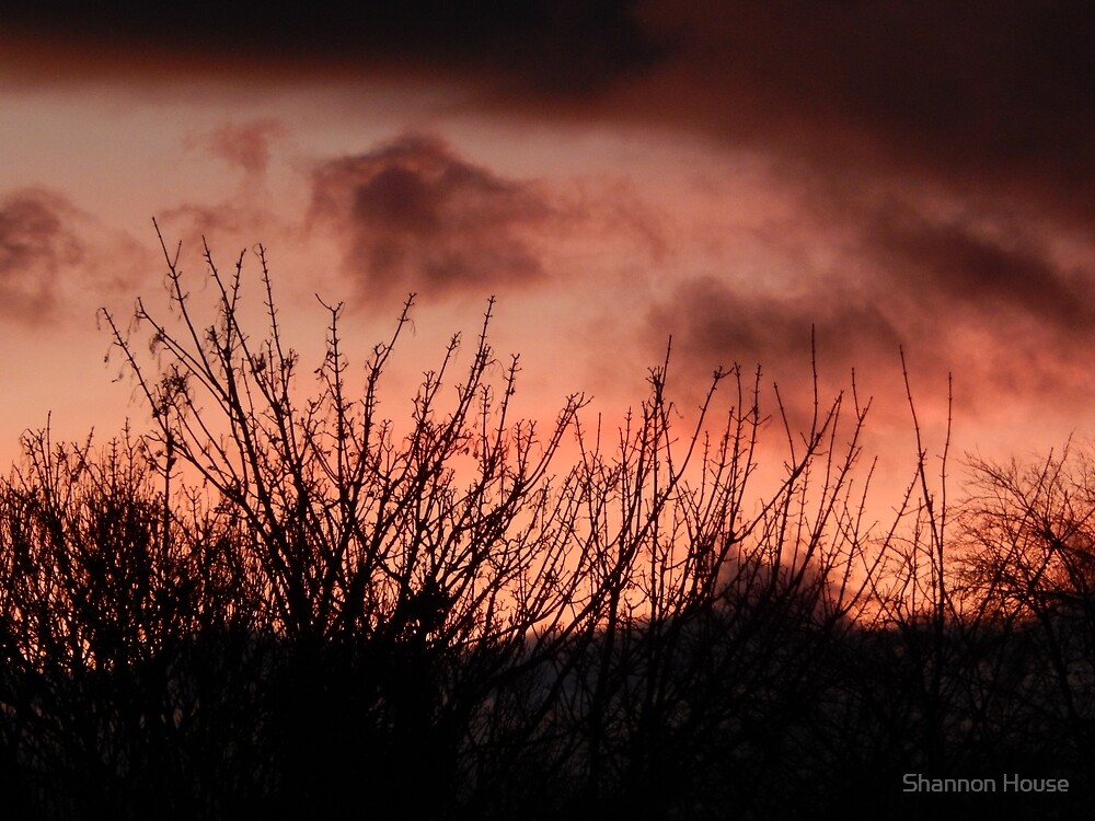 Sunset Over the Branches by Shannon House