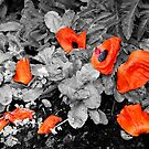 Fallen Petals by Mike HobsoN
