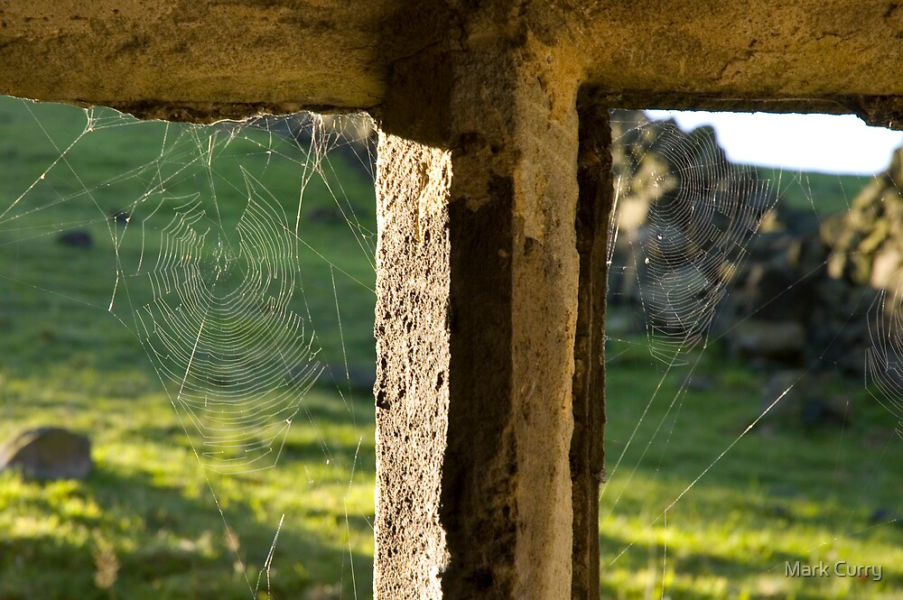 Web on a window by Mark Curry