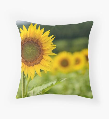 Sunflowers in Bloom Throw Pillow