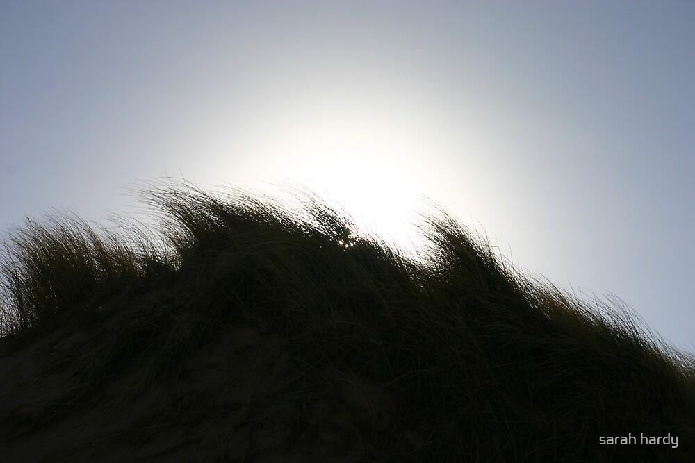 sand dunes by sarah hardy