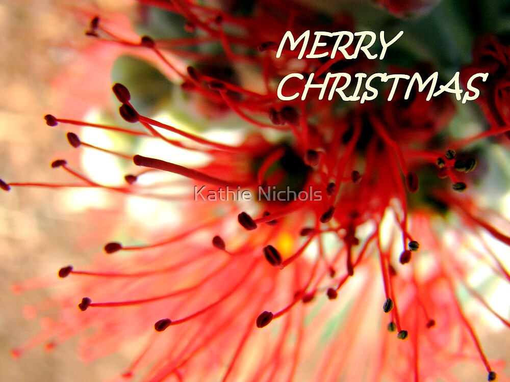 Callistamon Christmas by Kathie Nichols