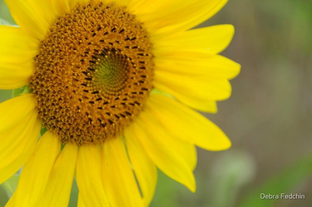 Blooming Sunflower #2 by Debra Fedchin