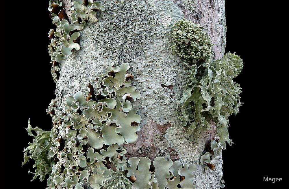 Lichen diversity by Magee
