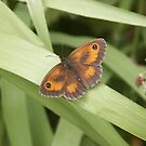 butterfly on grass by sarah hardy