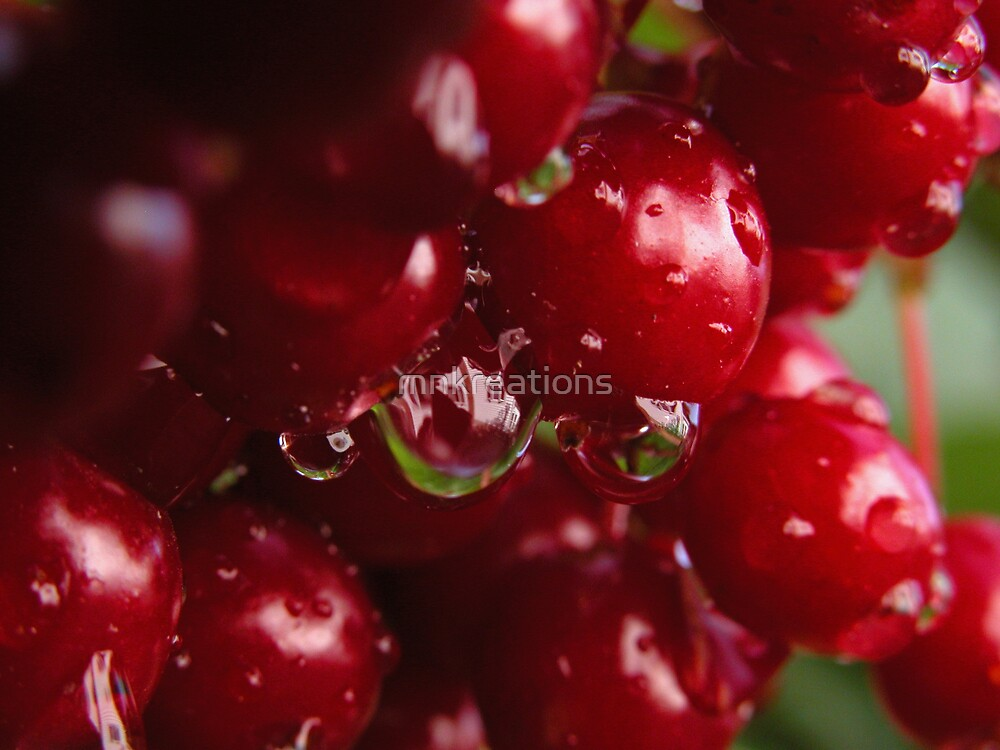 High Bush Cranberries After Rain 2 by mnkreations