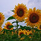 Sunny Faces by Debra Fedchin