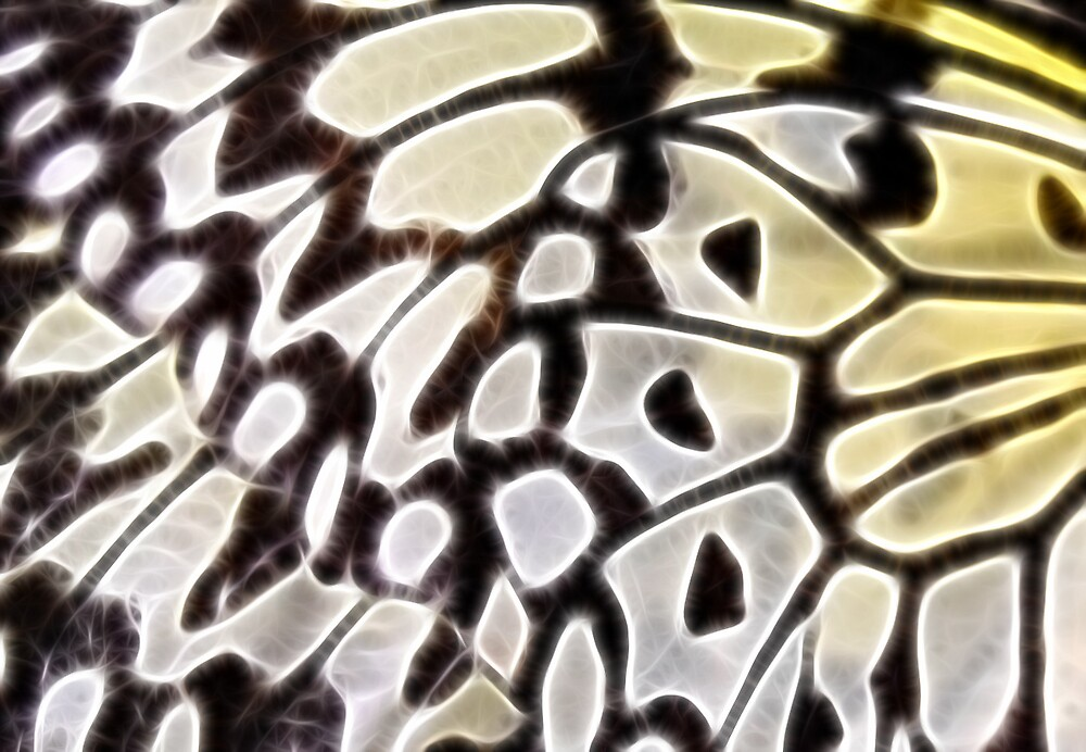 Butterfly Wing by Lisa Kent