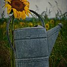 The Waterbucket by Debra Fedchin