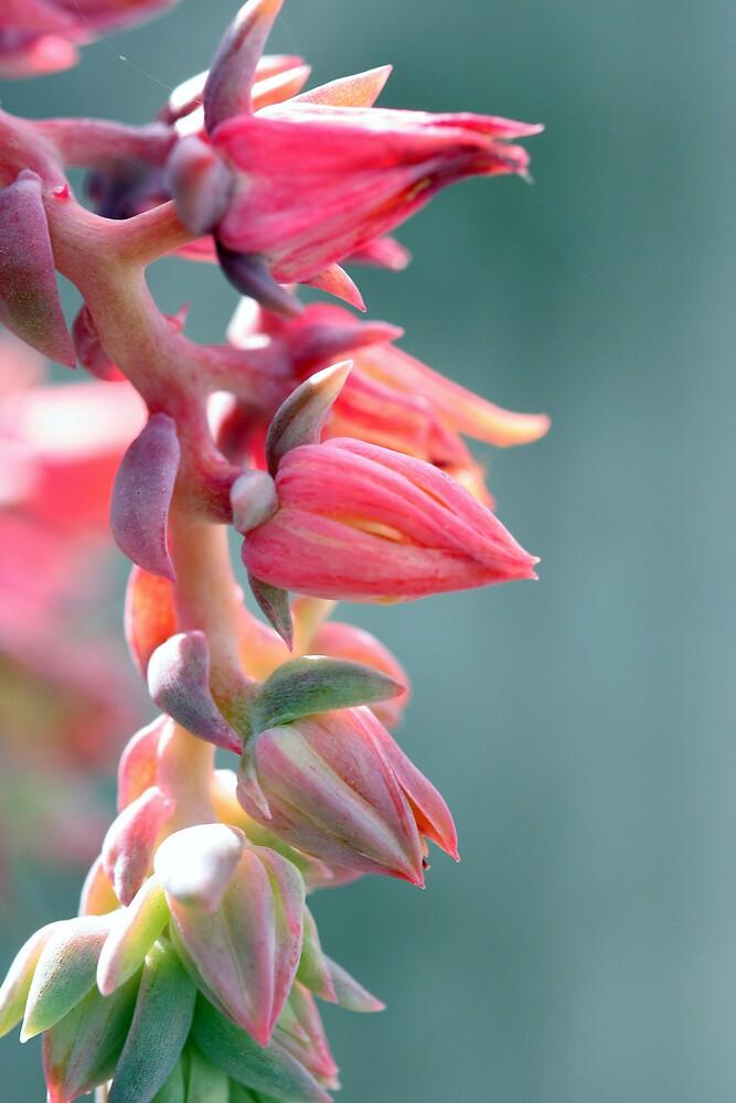 Flowers 3 by Mark Mair