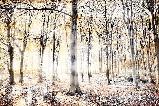 Whispering woodland in autumn fall by simonbratt