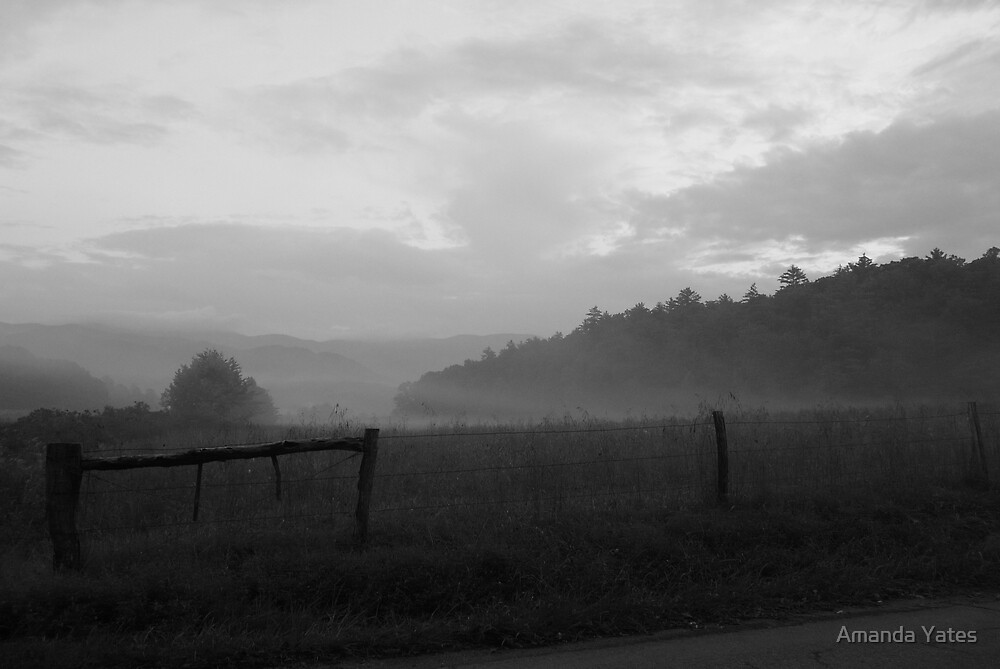 Mist morn by Amanda Yates