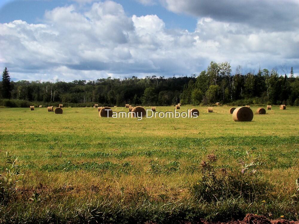 Last Hay Crop by TingyWende