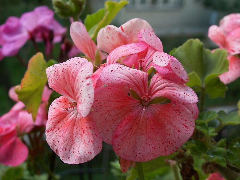 flower by erdogan49