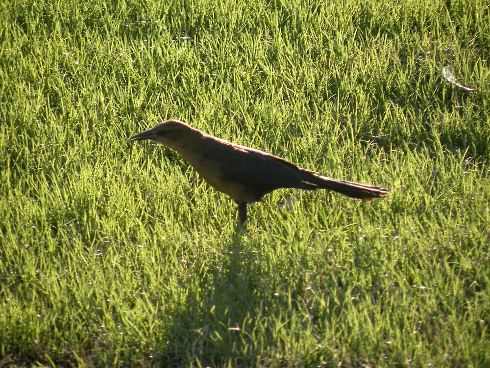 Sparrow wonder by Bonnie Pelton