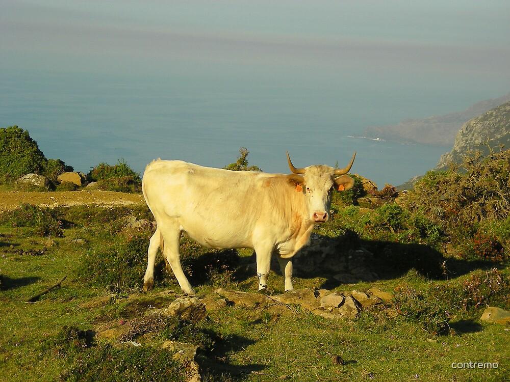 La vaca by contremo
