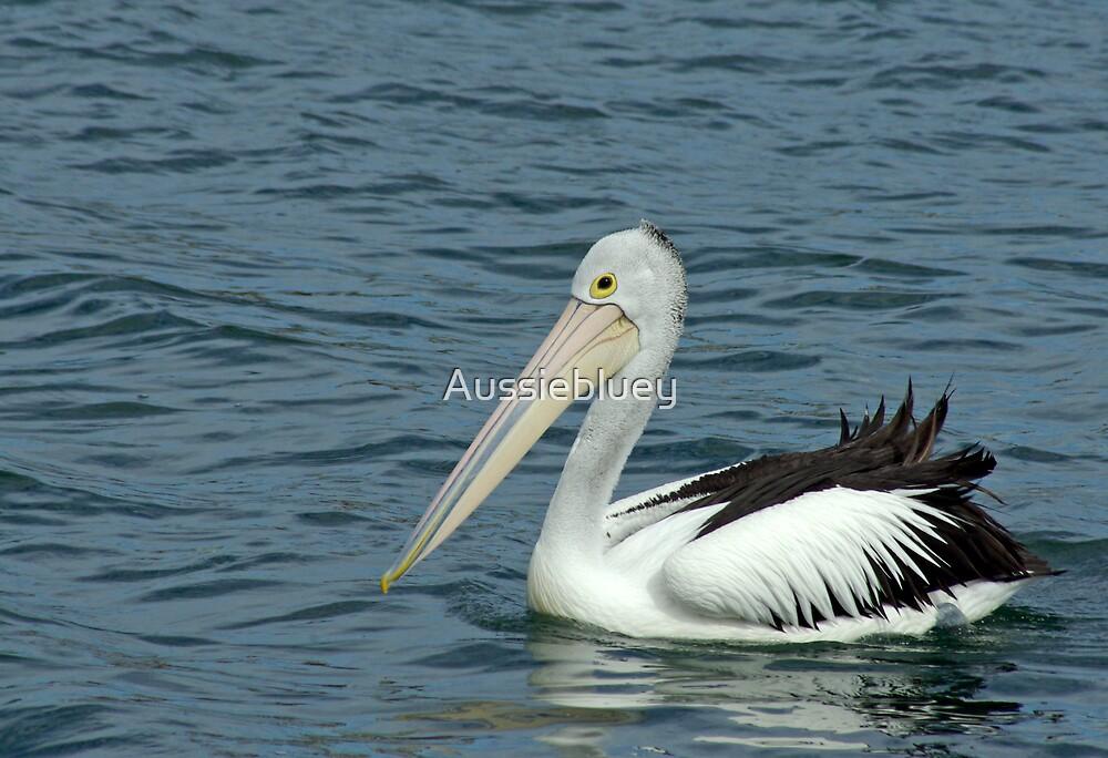 Pelican by Aussiebluey