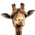 Why so glum Mrs Giraffe by Ladymoose
