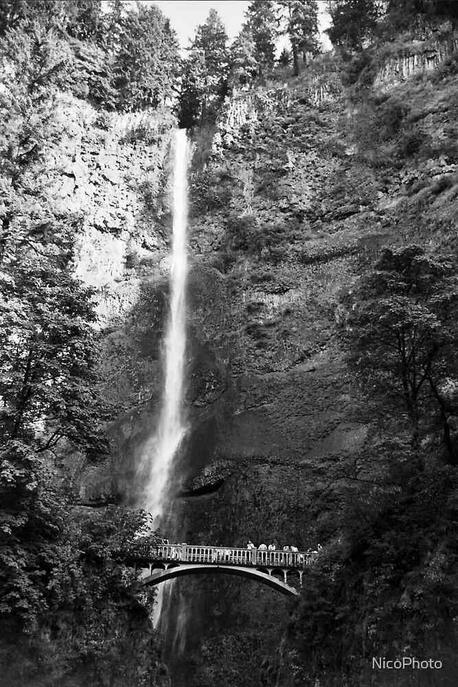 Multnomah Falls  by NicoPhoto
