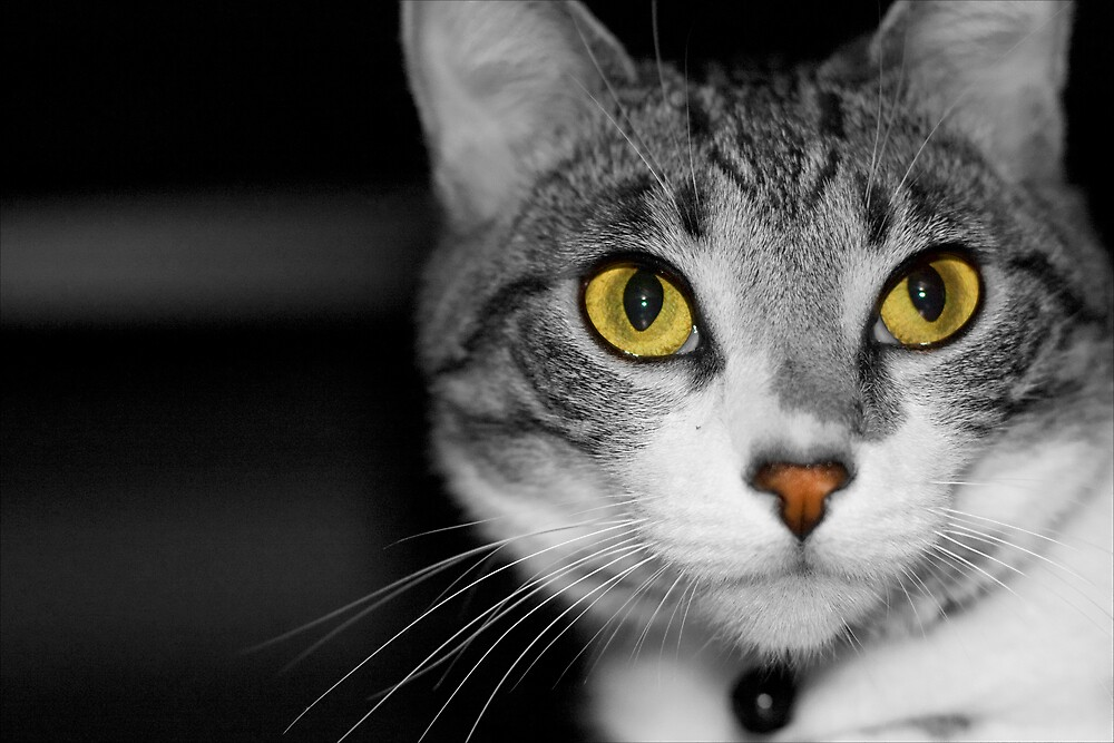 Cat Cat, black & white by abcbigc