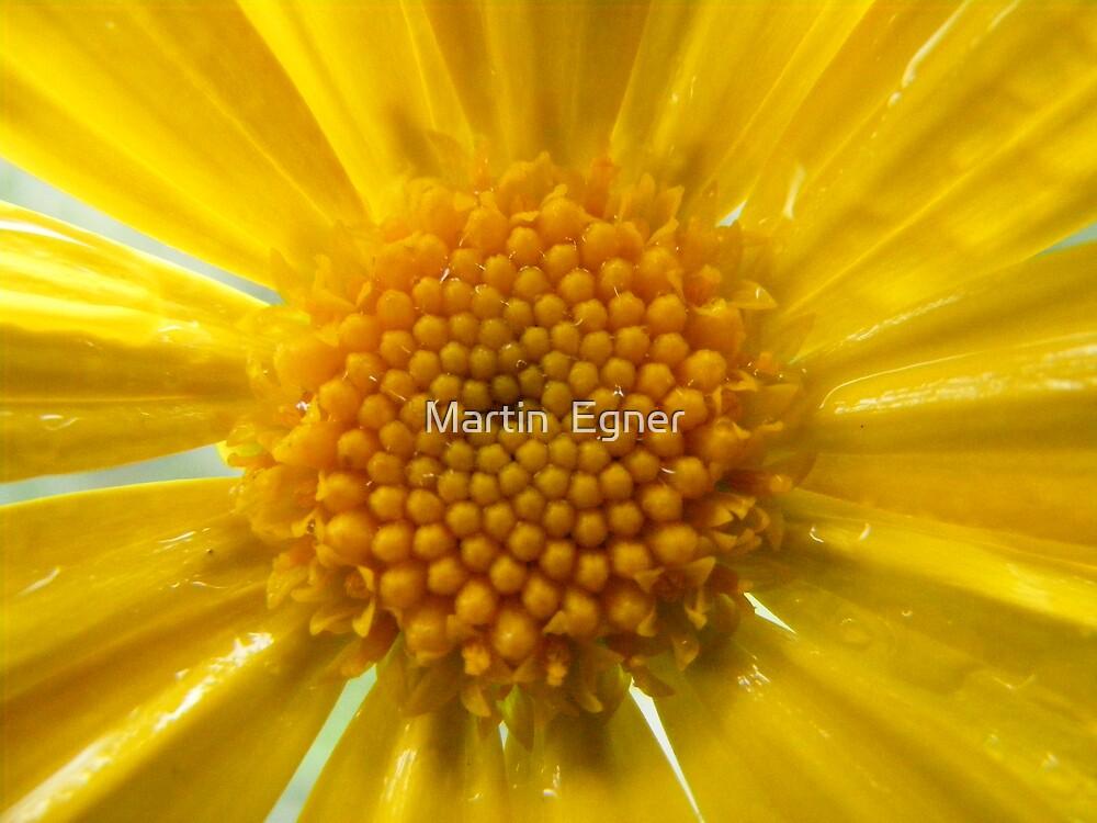 Petals Of Sunlight by Martin  Egner