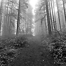 Forest pathway leading into the fog by Jeff Hathaway
