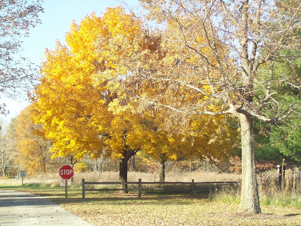 Autumn at Middlefork by jeanhogan