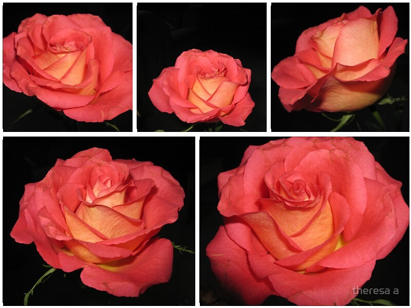 rose collage by theresa a