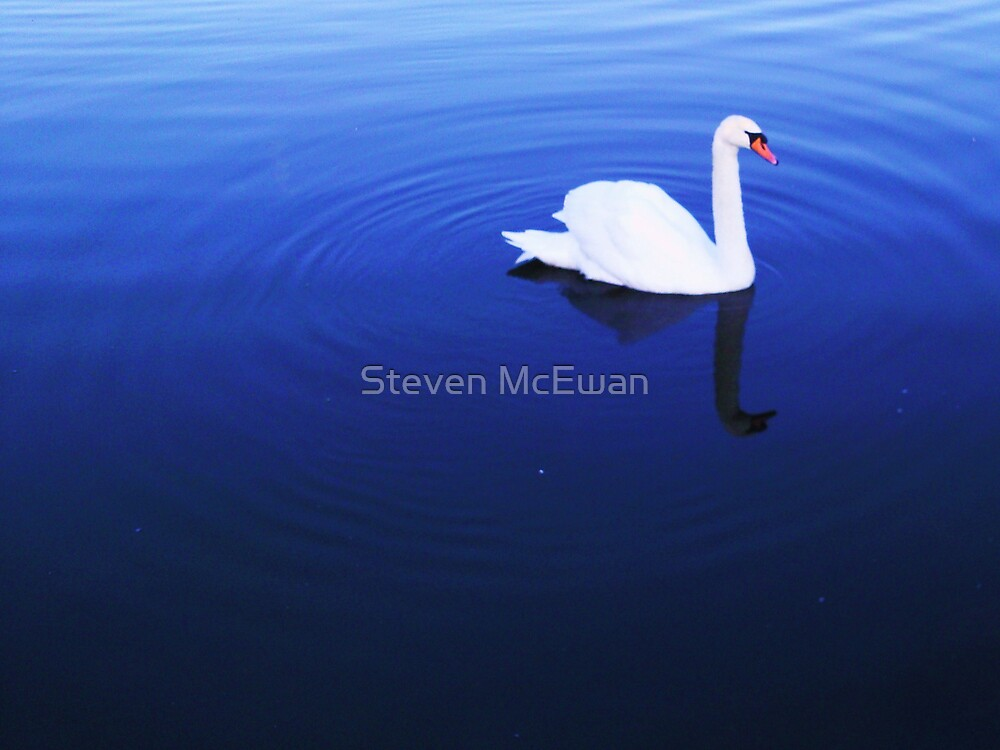 Blue Swan by Steven McEwan