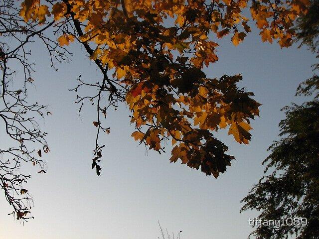 Autumn by tiffany1089