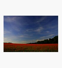 Poppy Freedom (Remembrance Day) Photographic Print