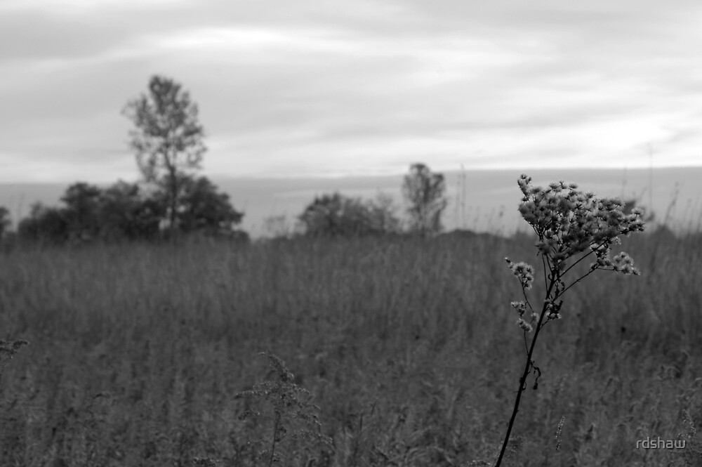 Ironweed, Meadow, Tree by rdshaw