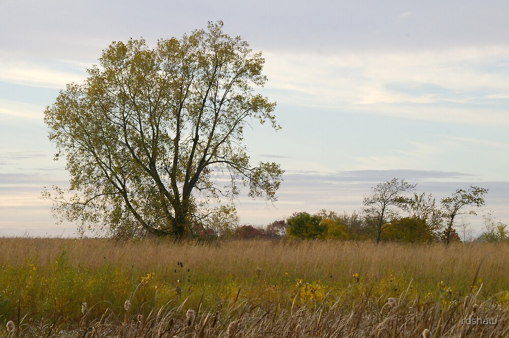 Tree in a Meadow by rdshaw