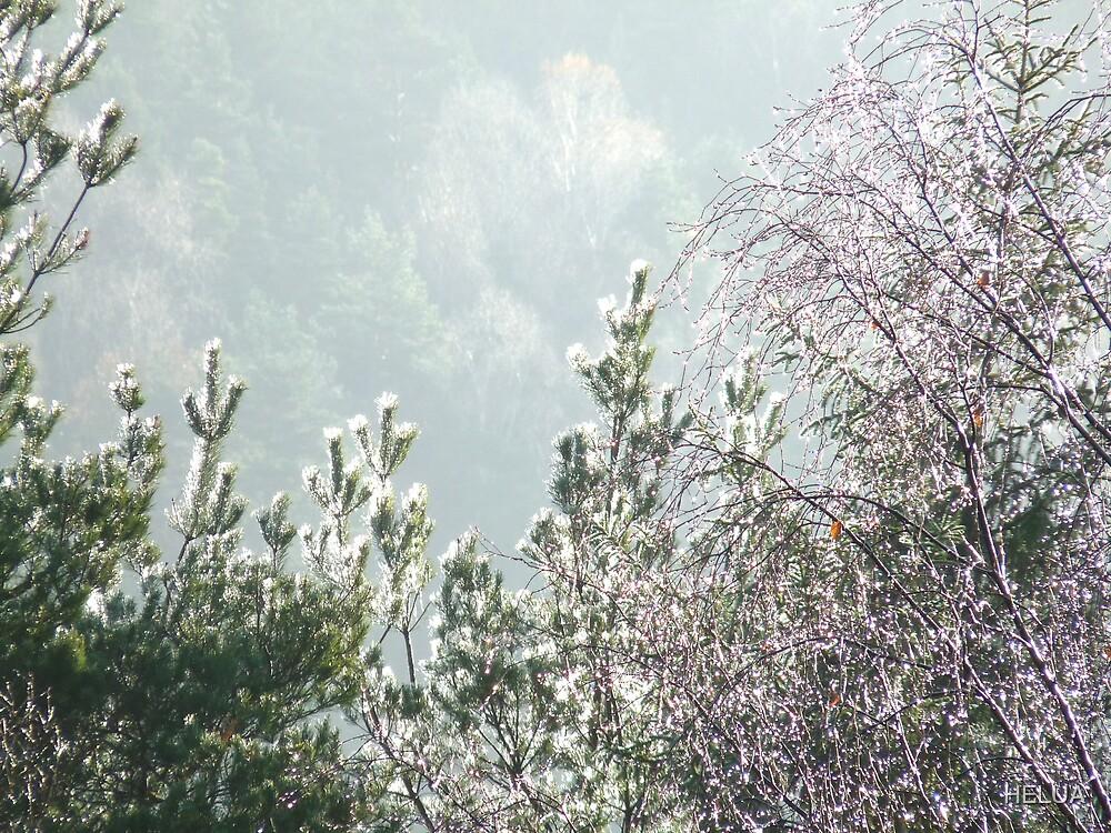 November Morning by HELUA